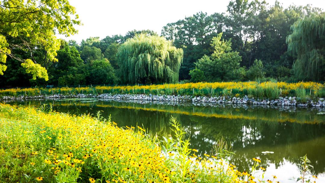 pond-rocks
